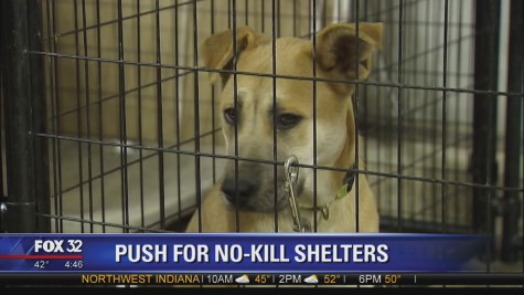 "Editorial: ""No kill"" Chicago animal shelters"